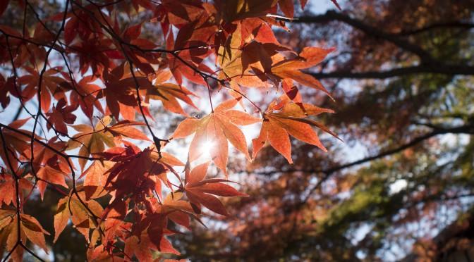 箱根での紅葉狩りの写真