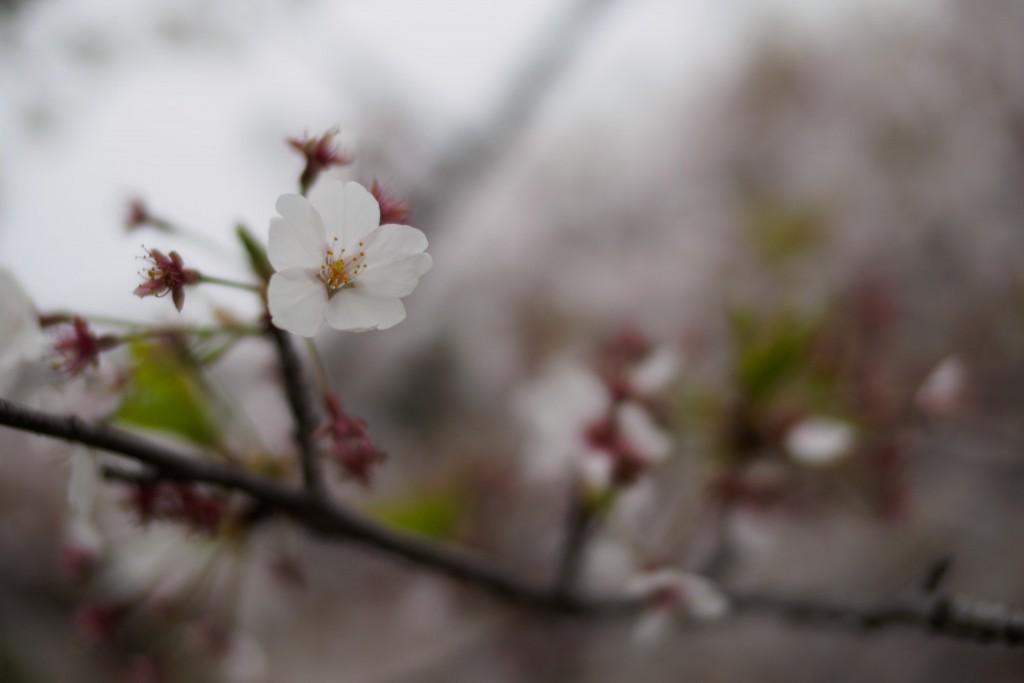残りの一花