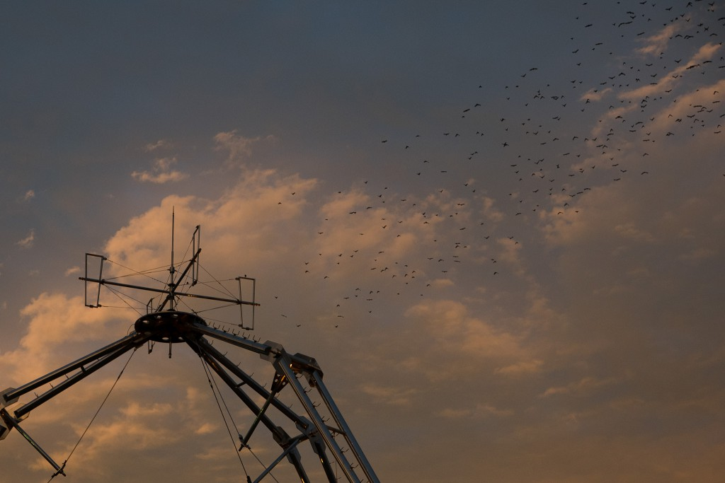 A flock / 鳥群